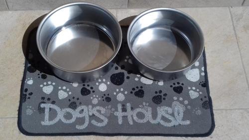 Casa-Bianca-dog